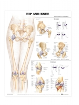 Hip and Knee Poster